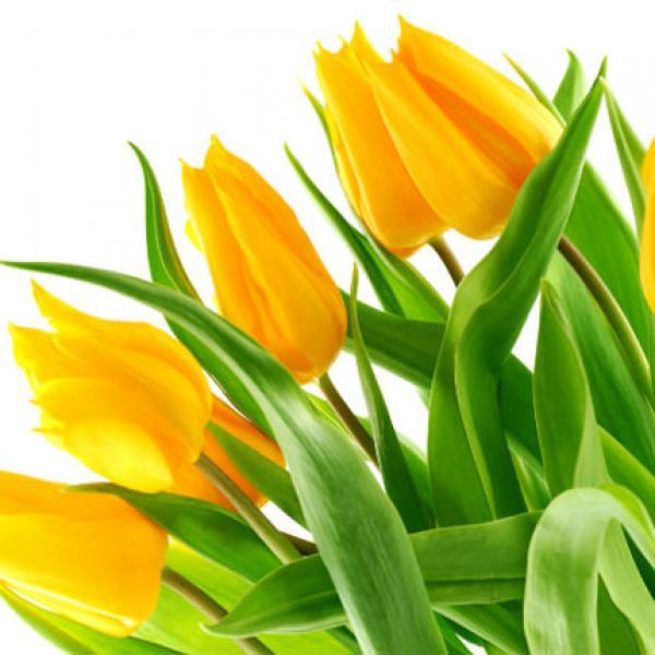 9 желтых тюльпанов