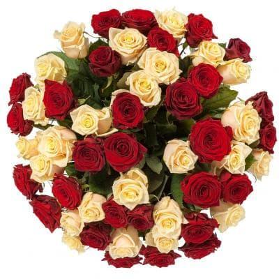 51 красная и кремовая роза