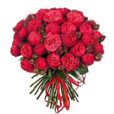 51 бордовая пионовидная роза