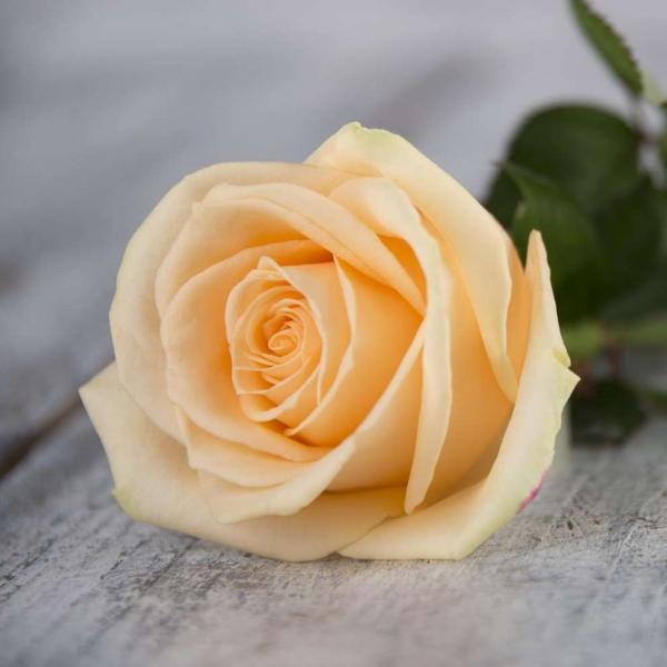 """Букет """"Ваниль"""" 101 кремовая  роза"""